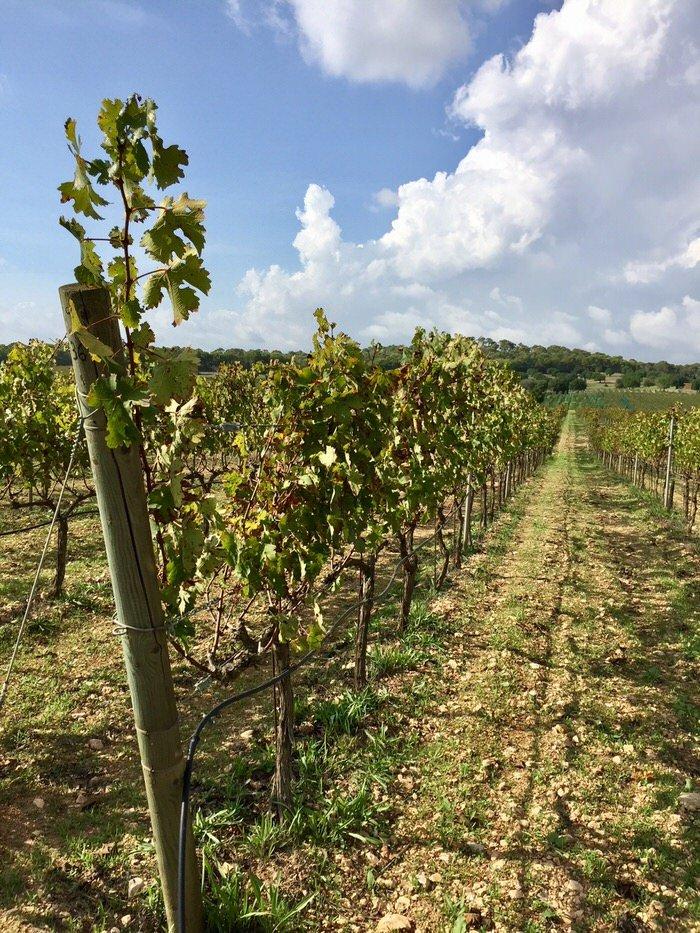 Weintouren auf Mallorca