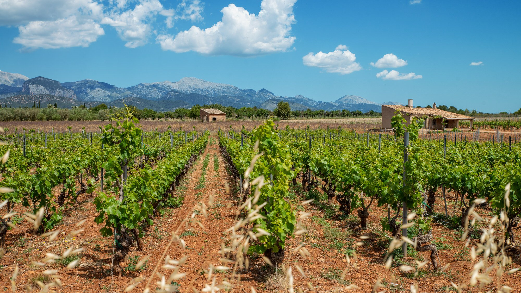 The most beautiful Vineyards & Wineries in Mallorca